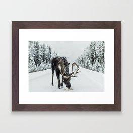 Moose in the wild Framed Art Print