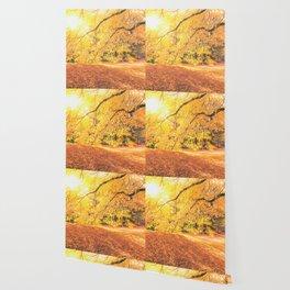 New York City Autumn Sun Wallpaper