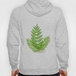 Acacia tree branch Hoody