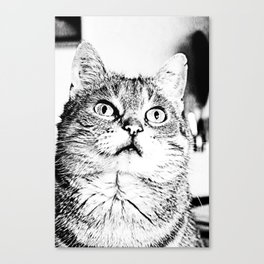Lilly the Tiger Cat Canvas Print