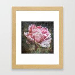 Vintage Roses - English Rose Framed Art Print