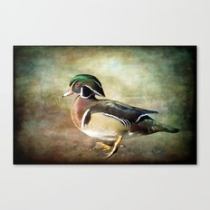 Handsome Fella - Wood Duck Canvas Print
