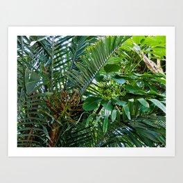 Jardins des Plantes Art Print