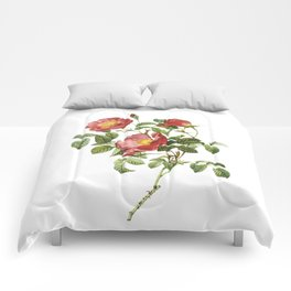 Vintage Red Roses [06] Comforters