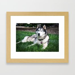 Bi-eyed Beauty Framed Art Print