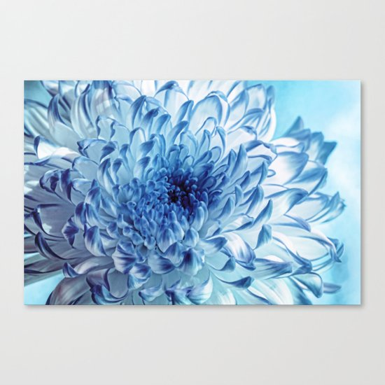 Blue Chrysanthemum Canvas Print