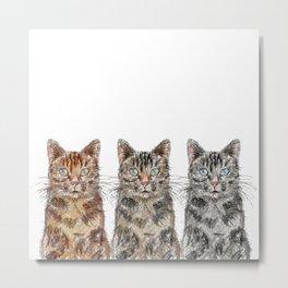 Triple Tabbies Cats Metal Print