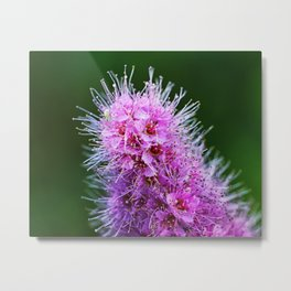 Beauty Home Of The Little Spider Metal Print