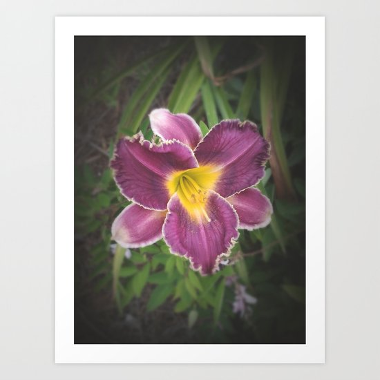 Lily Wild Art Print
