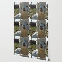 Smiling Llama Wallpaper