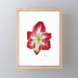 Amaryllis Framed Mini Art Print