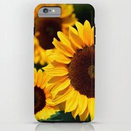 sunflower_34 iPhone Case