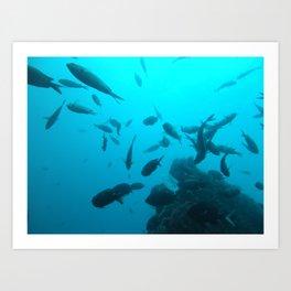 Fish on the Pinnacle  Art Print