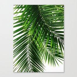Palm Leaves #3 Canvas Print