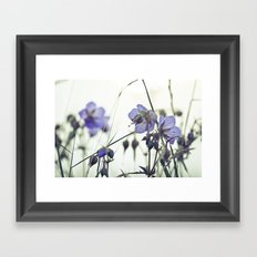 Sunlit meadow Crane's-bill Framed Art Print