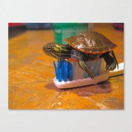 Turtle Brush Canvas Print