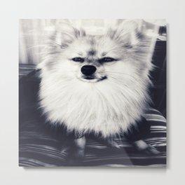 Black and White Pomeranian Metal Print