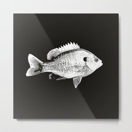Black and White Bluegill Metal Print