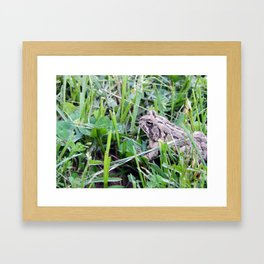 The Waiting Frog Framed Art Print
