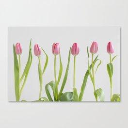 Rose tulips Canvas Print
