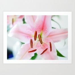 Lily #1 Art Print