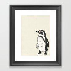 Humboldt Penguin Framed Art Print