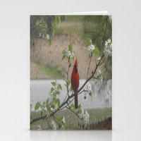cardinal Stationery Cards featuring Cardinal  by Earth'sAnimalActivist23