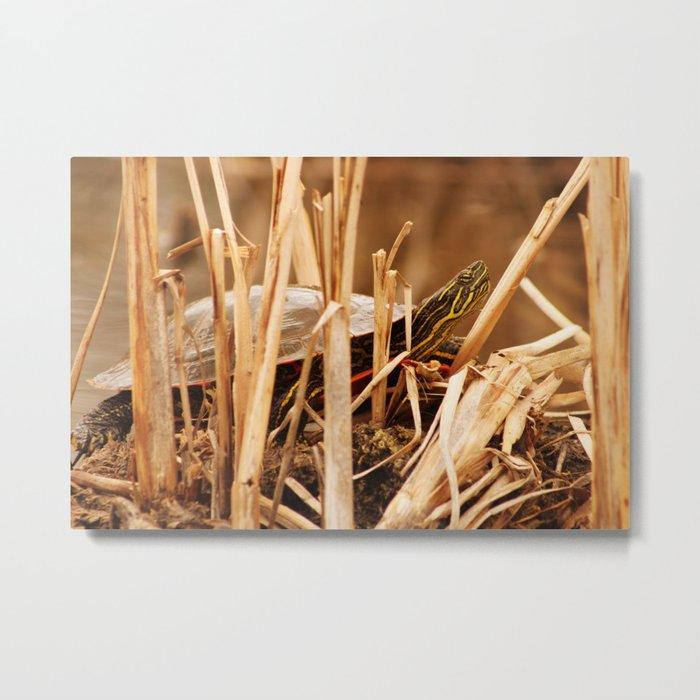Painted Turtle Sunning Itself In Reeds Metal Print