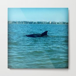 Dolphin in the City Metal Print