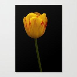 A Flaming Tulip Canvas Print