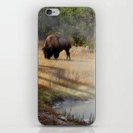 Buffalo at Thermal Pool iPhone Skin