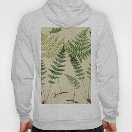 Botanical Ferns Hoody
