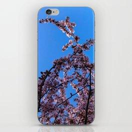 South Portland Spring 2018 (1) iPhone Skin