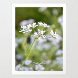 Coriander in flowers II Art Print