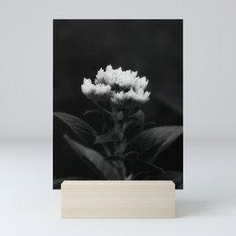 Hydrangea Buds in Infrared Mini Art Print