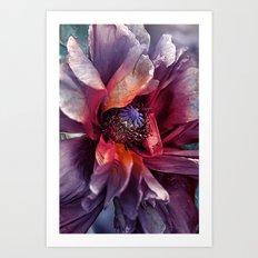Abstract poppy(2). Art Print