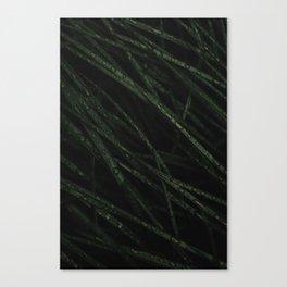 RESTORED Canvas Print