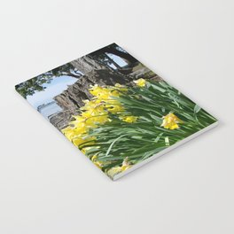 DAFFODILS OF SPRING IN THE SAN JUAN ISLANDS Notebook