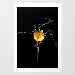 Mandarin composition Art Print