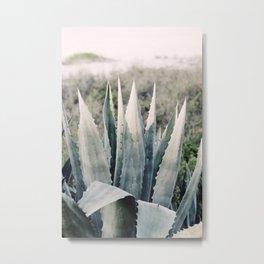 Pale Agave Metal Print