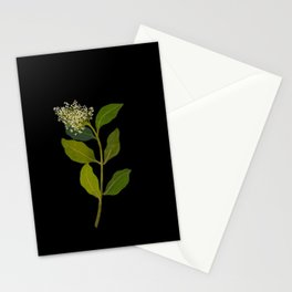 Olea Capensis Mary Delany British Botanical Floral Art Paper Flowers Black Background Stationery Cards