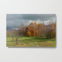 colorful trees in park in autumn Metal Print