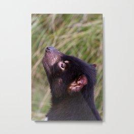 Tasmanian Devil Metal Print