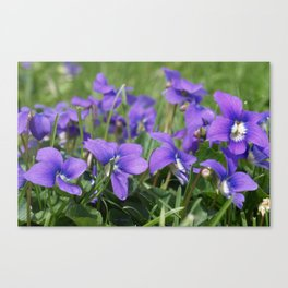 Lawn Gems of Spring Canvas Print