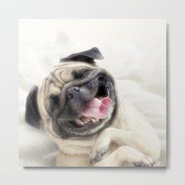 Smiling pug.Funny pug Metal Print