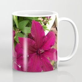 Rouge Cardinal Clematis Coffee Mug