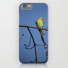 Alexandrine Parakeet iPhone 6s Slim Case