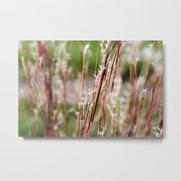 Wild Red Grass Metal Print