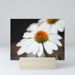 Macro White Coneflowers Mini Art Print