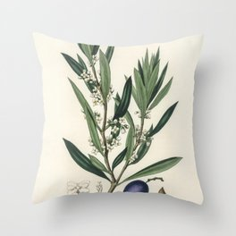 Olive (Olea europaea)  from Medical Botany (1836) by John Stephenson and James Morss Churchill Throw Pillow